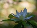 DSC_2971 kwiatek