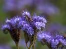 DSC_2990 kwiatki
