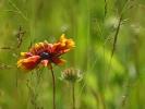 DSC_2991 kwiatek