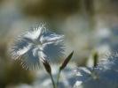 DSC_2998 kwiatek