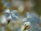DSC_3001 kwiatek