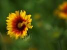 DSC_3010 kwiatek