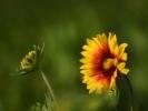 DSC_3012 kwiatek