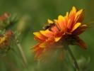 DSC_3013a kwiatek