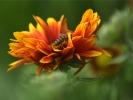 DSC_3019 kwiatek