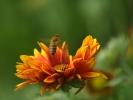 DSC_3020 kwiatek