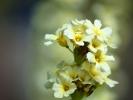 DSC_3042 kwiatek