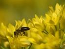 DSC_3048 kwiatek