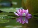 DSC_3065 lilia