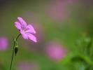 DSC_3069 kwiatek