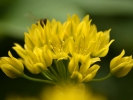 DSC_3075 kwiatki