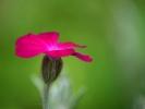 DSC_3098 kwiatek