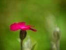 DSC_3101 kwiatek
