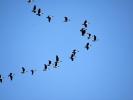 DSC_8389 ptaki