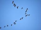 DSC_8390 ptaki