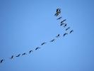 DSC_8392 ptaki