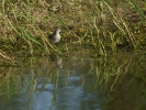 DSC_8531 ptak