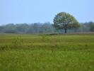 DSC_8578 drzewo