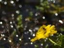DSC_8651 kwiatek