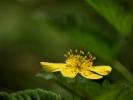 DSC_8675 kwiatek