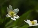 DSC_8679 kwiatek
