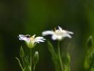 DSC_8694 kwiatek