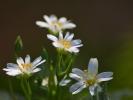 DSC_8697 kwiatki