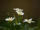 DSC_8699 kwiatek