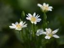 DSC_8703 kwiatki