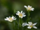 DSC_8705 kwiatek