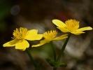 DSC_8718 kwiatek