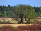 DSC_8791 drzewa