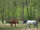 DSC_8947 konie