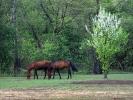 DSC_8974 konie