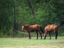 DSC_8977 konie dwa