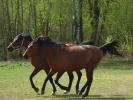 DSC_8996 konie dwa