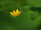DSC_9135 kwiatek