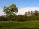 DSC_9145 drzewo