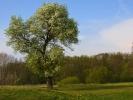 DSC_9147 drzewo