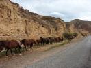 W drodze do doliny Djety Oguz - spęd koni i bydła