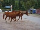 Dolina Djety Oguz - spęd koni i bydła