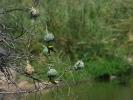 Park Krugera - ptaki