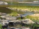 Park Krugera - Ptak