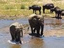 Park Krugera - Słoń i bawół