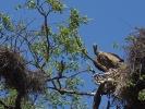 Park Krugera - Sęp