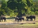 Park Krugera - Słoń i lampart