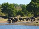 Park Krugera - Słoń