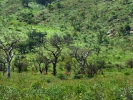 Rezerwat Hluhluwe - Antylopa Impala
