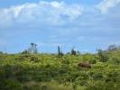 Rezerwat Hluhluwe - Słoń i nosorożec