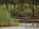 Saint Lucia Estuarium - Ptak